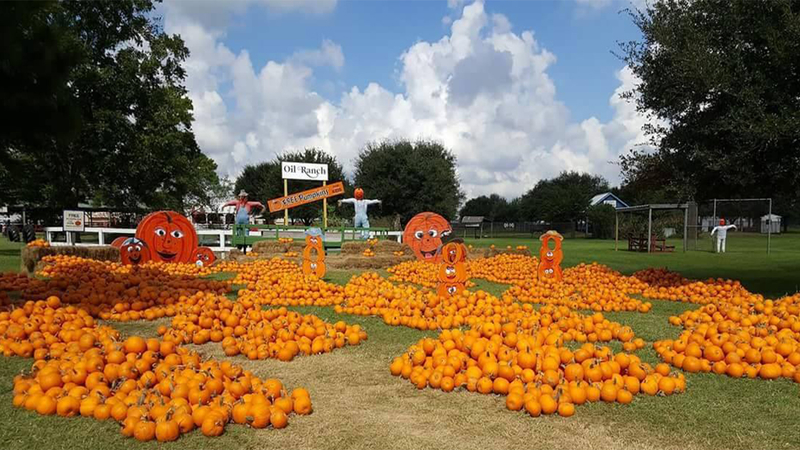 Holy cross pumpkin patch 2020, an event in sugar land, texas.
