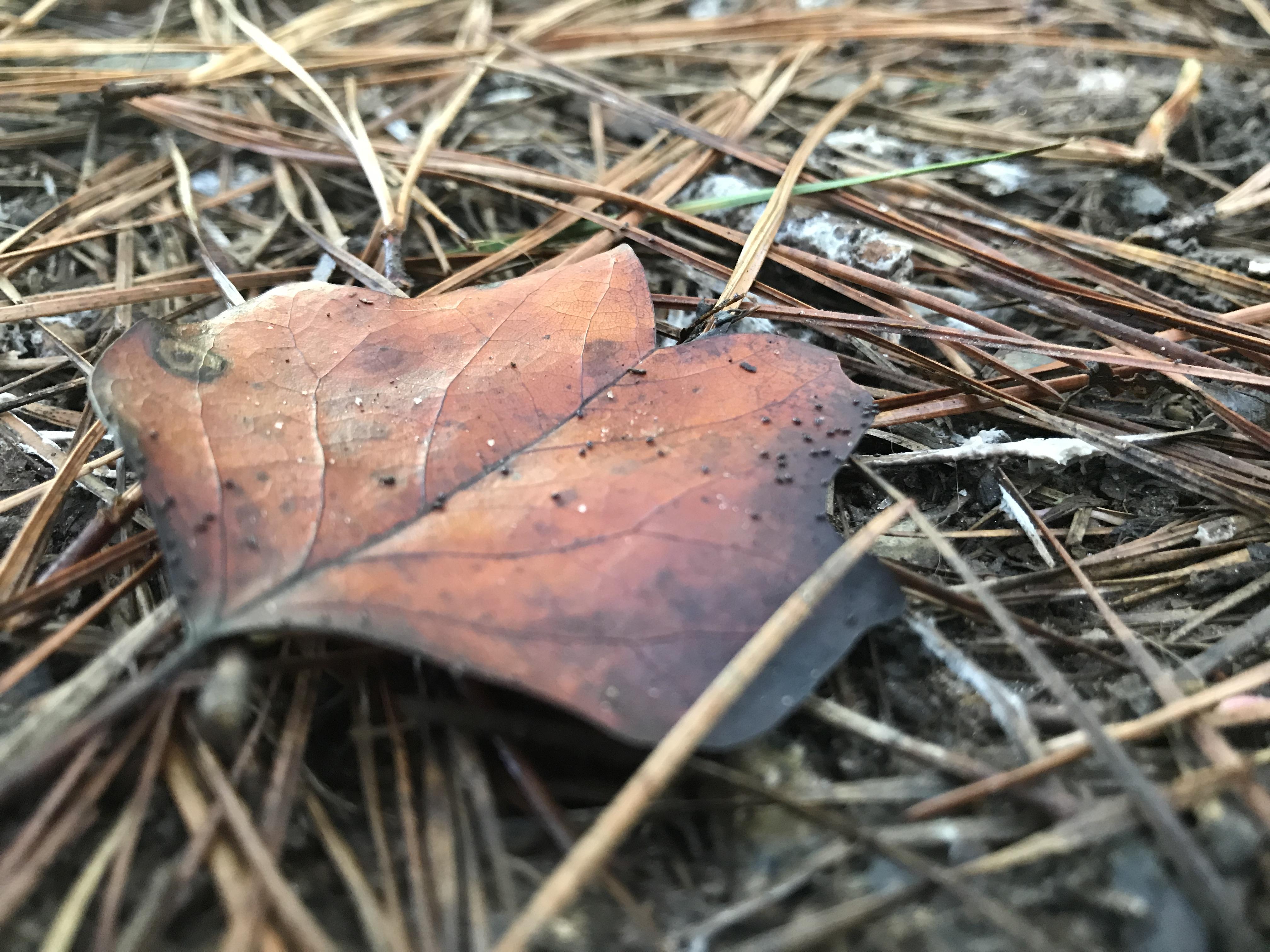 "<div class=""meta image-caption""><div class=""origin-logo origin-image none""><span>none</span></div><span class=""caption-text"">Enjoying the first day of fall at Lake Johnson (WTVD photo/Bob Gaughran)</span></div>"