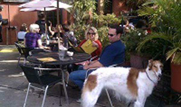 Dog Friendly Restaurants Northwest Houston