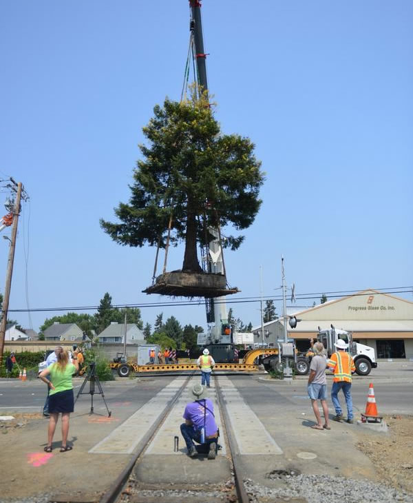 """<div class=""""meta image-caption""""><div class=""""origin-logo origin-image """"><span></span></div><span class=""""caption-text"""">The redwood was hoisted above power lines and carried down the track after settling on a truck bed. (Wayne Freedman/ABC7 News)</span></div>"""