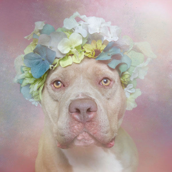 """<div class=""""meta image-caption""""><div class=""""origin-logo origin-image """"><span></span></div><span class=""""caption-text"""">Sweetheart, a dog from Second Chance Animal Rescue Society (Photo/Sophie Gamand Striking Paws)</span></div>"""