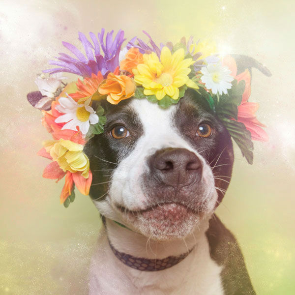 """<div class=""""meta image-caption""""><div class=""""origin-logo origin-image """"><span></span></div><span class=""""caption-text"""">Jellybean, a dog from Sean Casey Animal Rescue (Photo/Sophie Gamand Striking Paws)</span></div>"""
