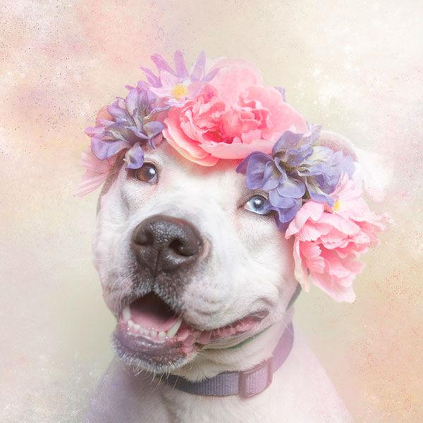 "<div class=""meta image-caption""><div class=""origin-logo origin-image ""><span></span></div><span class=""caption-text"">Cali, a dog from Sean Casey Animal Rescue (Photo/Sophie Gamand Striking Paws)</span></div>"