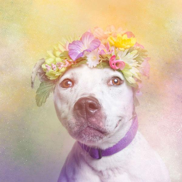 "<div class=""meta image-caption""><div class=""origin-logo origin-image ""><span></span></div><span class=""caption-text"">Erica, a dog from Sean Casey Animal Rescue (Photo/Sophie Gamand Striking Paws)</span></div>"
