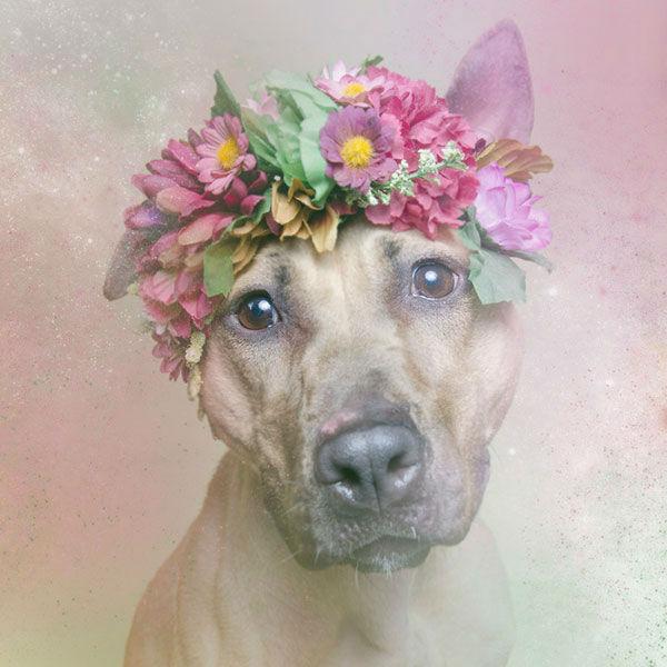 "<div class=""meta image-caption""><div class=""origin-logo origin-image ""><span></span></div><span class=""caption-text"">Regina, a dog from Sean Casey Animal Rescue (Photo/Sophie Gamand Striking Paws)</span></div>"