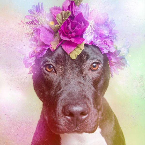"<div class=""meta image-caption""><div class=""origin-logo origin-image ""><span></span></div><span class=""caption-text"">Athena, a dog from Sean Casey Animal Rescue (Photo/Sophie Gamand Striking Paws)</span></div>"