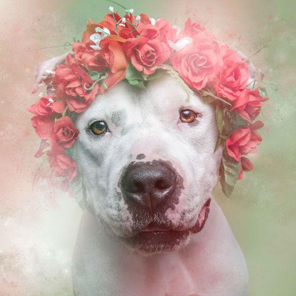 "<div class=""meta image-caption""><div class=""origin-logo origin-image ""><span></span></div><span class=""caption-text"">Rex, a dog from Sean Casey Animal Rescue (Photo/Sophie Gamand Striking Paws)</span></div>"
