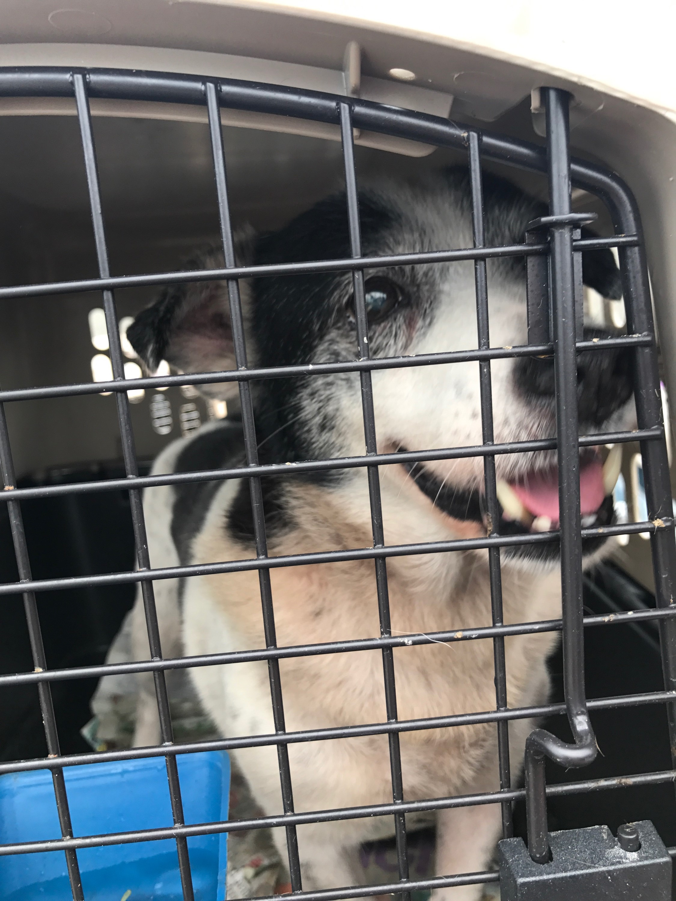 "<div class=""meta image-caption""><div class=""origin-logo origin-image none""><span>none</span></div><span class=""caption-text"">Dozens of homeless pets are being transported from Puerto Rico to the SPCA of Wake County (Credit: Humane Society of the United States)</span></div>"
