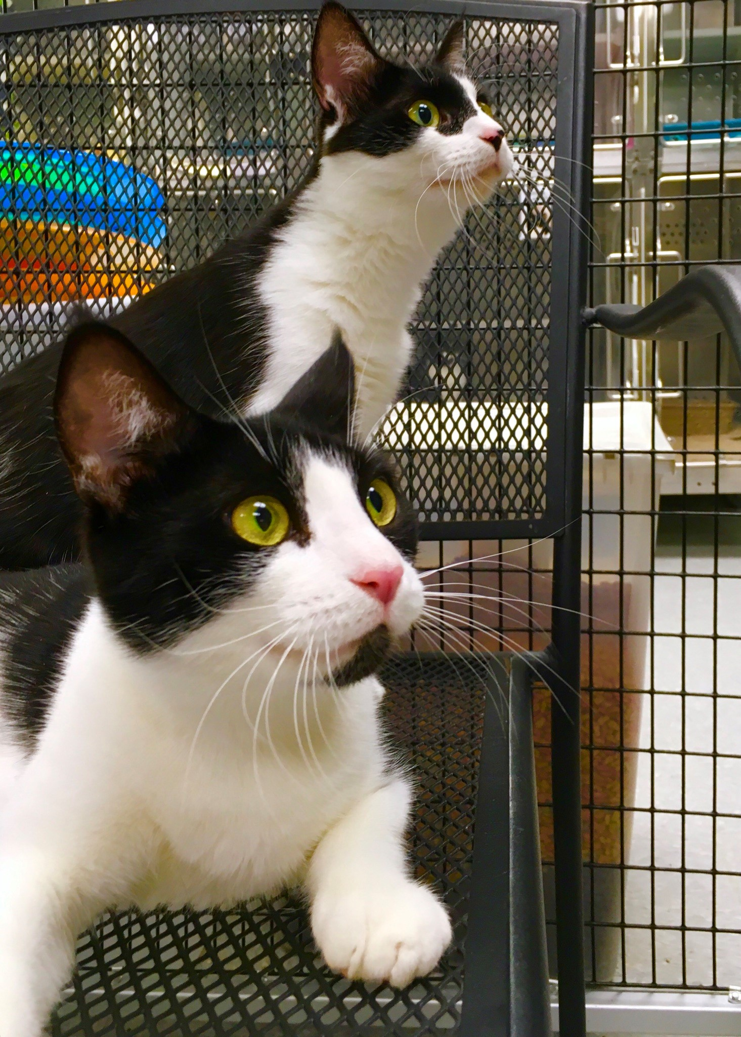 """<div class=""""meta image-caption""""><div class=""""origin-logo origin-image none""""><span>none</span></div><span class=""""caption-text"""">Mary Jane and Nala are BFFs. They stay busy making friendship bracelets and would like to be adopted together. (WTVD photo/Julie Wilson)</span></div>"""