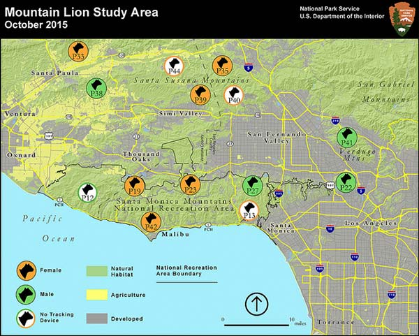 This map from the National Park Service shows the mountain lion study area.