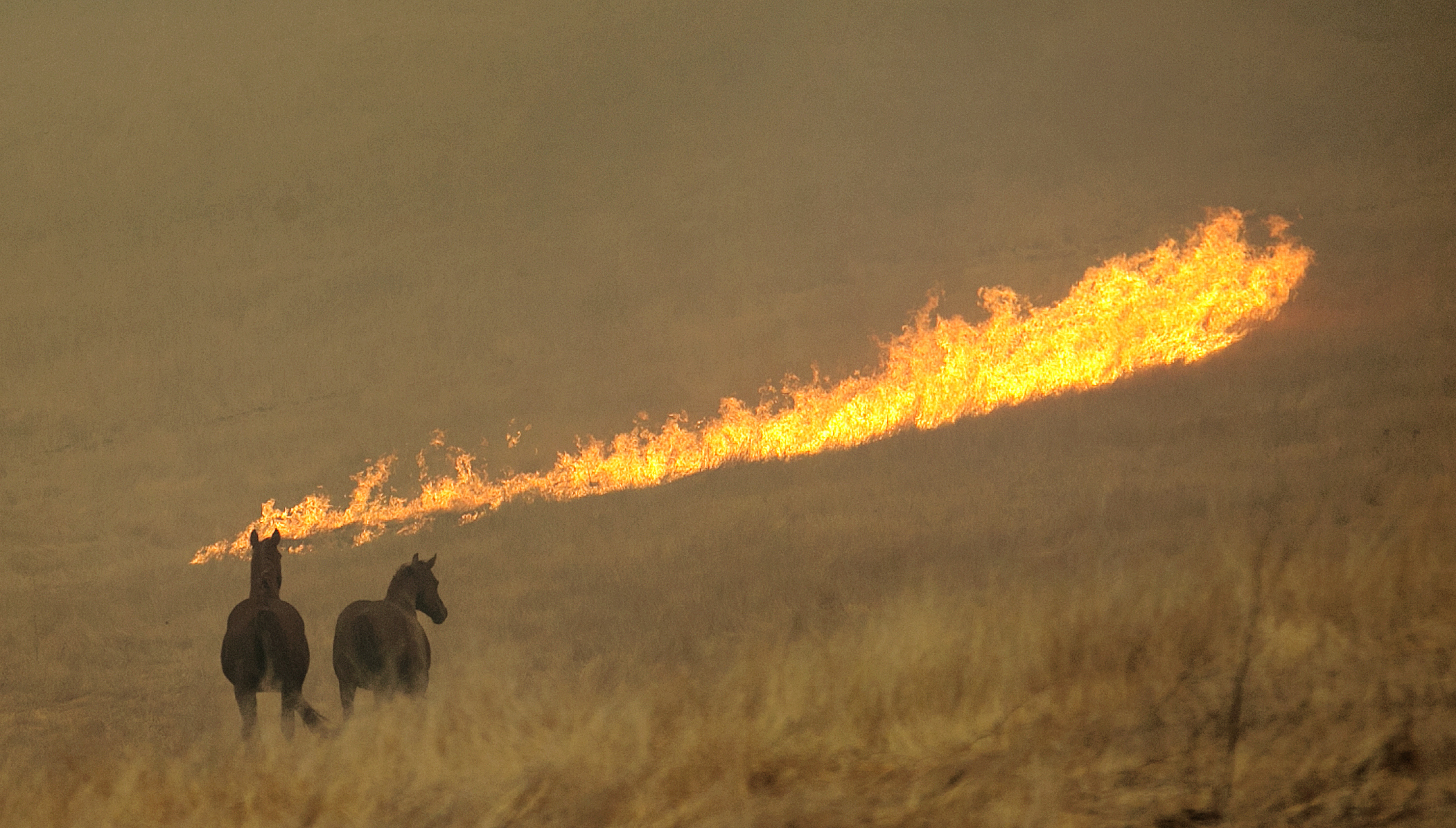 <div class='meta'><div class='origin-logo' data-origin='none'></div><span class='caption-text' data-credit='Rich Pedroncelli/AP Photo'>Flames from a wildfire approach a pair of horses in a field Monday, Oct. 9, 2017, in Napa, Calif.</span></div>