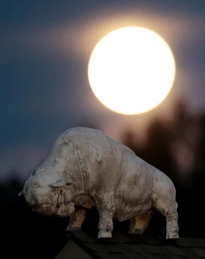 "<div class=""meta image-caption""><div class=""origin-logo origin-image ""><span></span></div><span class=""caption-text"">A statue of a bison stands over a business in Custer, S.D., under a supermoon, Sunday, Aug. 10, 2014, in Custer, S.D. (AP Photo/Julio Cortez)</span></div>"