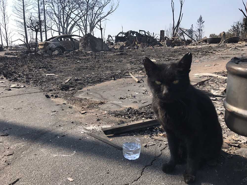 <div class='meta'><div class='origin-logo' data-origin='none'></div><span class='caption-text' data-credit='Marin Humane'>A cat in front of an area burnt down by wildfires.</span></div>