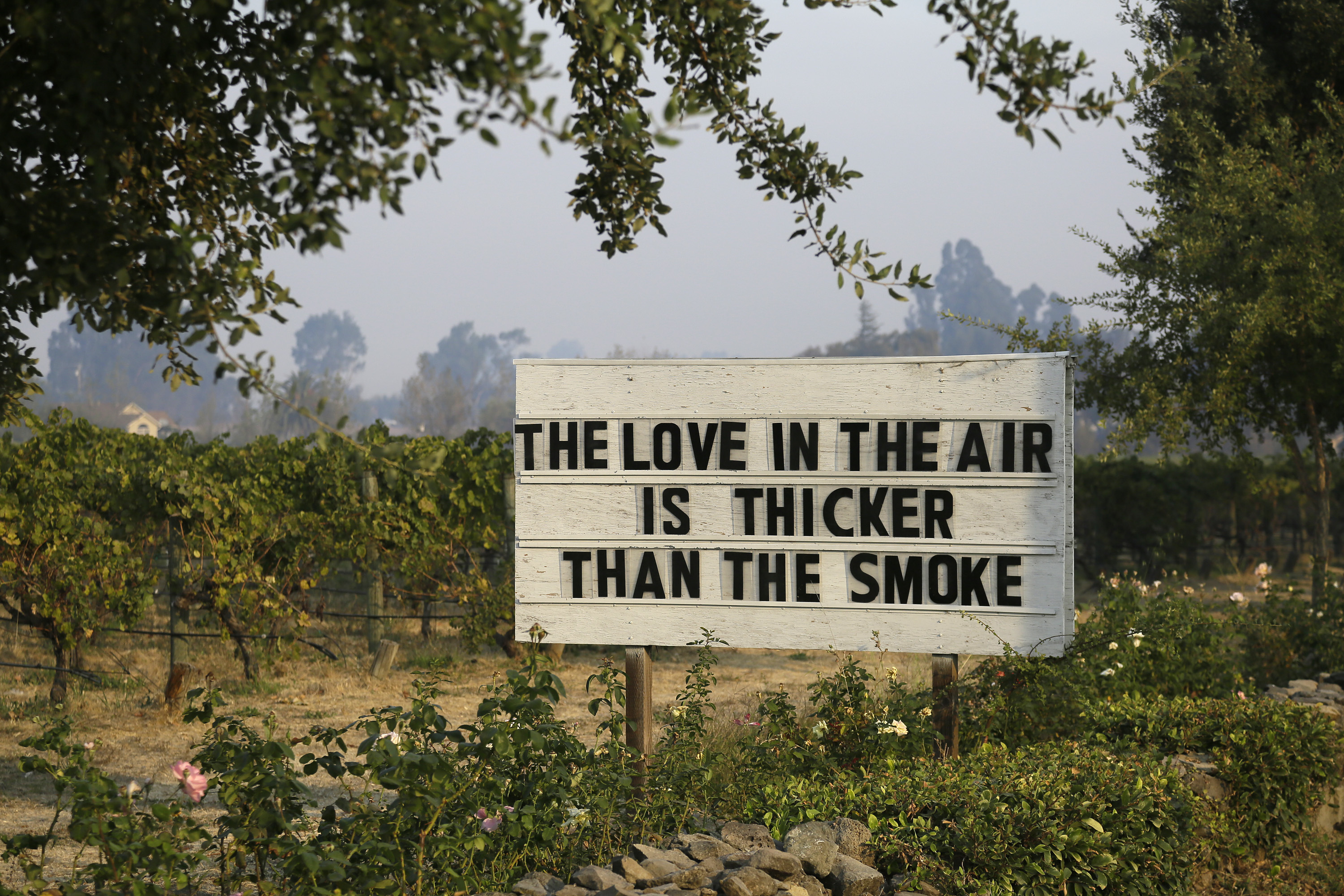 <div class='meta'><div class='origin-logo' data-origin='none'></div><span class='caption-text' data-credit='Eric Risberg/AP Photo'>A sign about the recent wildfires stands in a vineyard outside the Cline Cellars winery Monday, Oct. 16, 2017, in Sonoma, Calif.</span></div>
