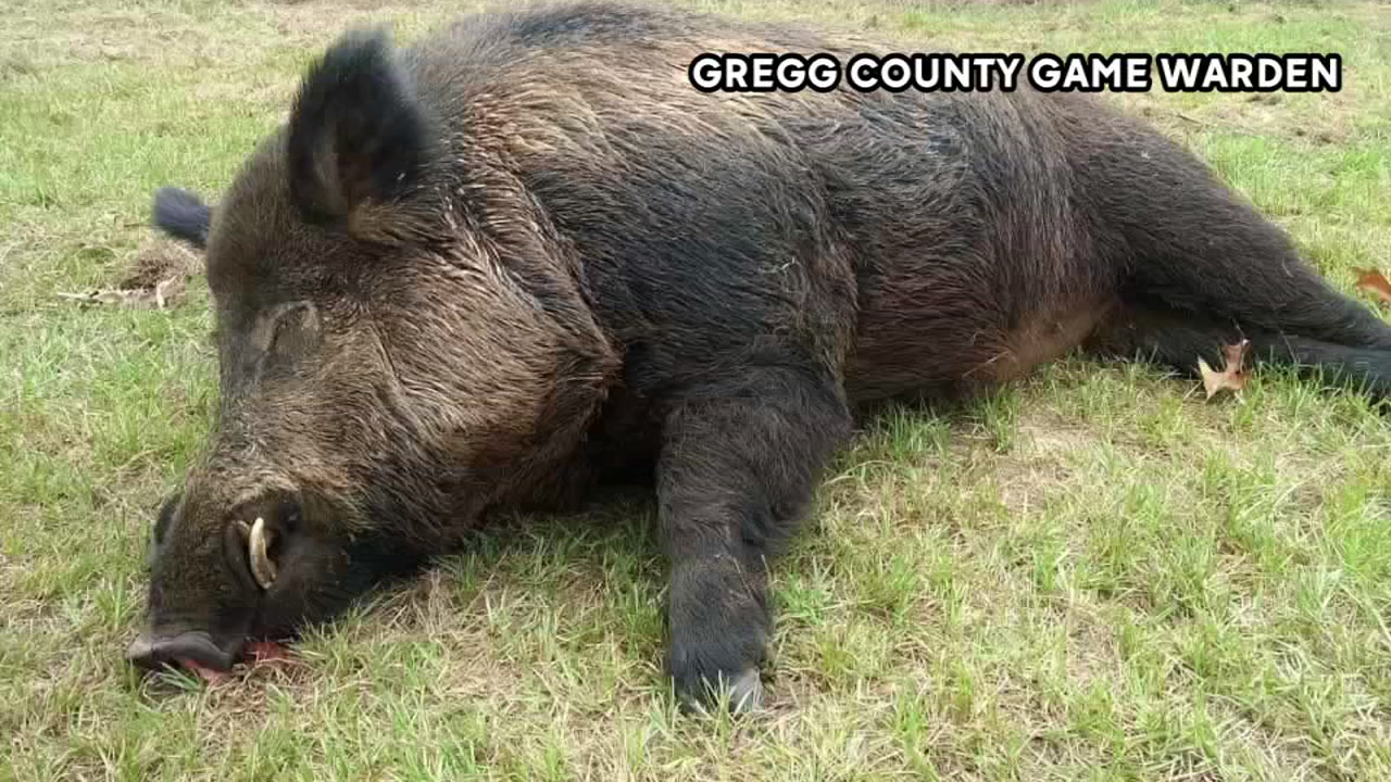 Where Is The Best Place To Shoot A Wild Hog - Best Place To Visit 2018