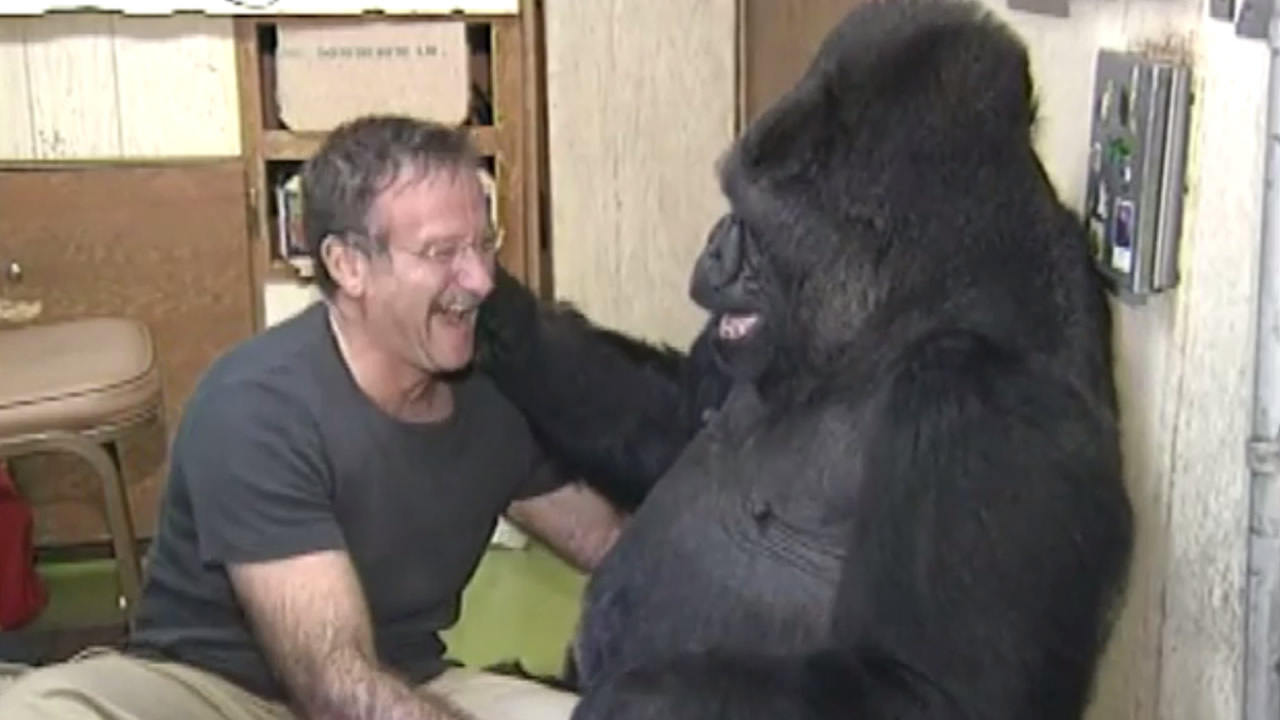 Robin Williams and Koko the gorilla.