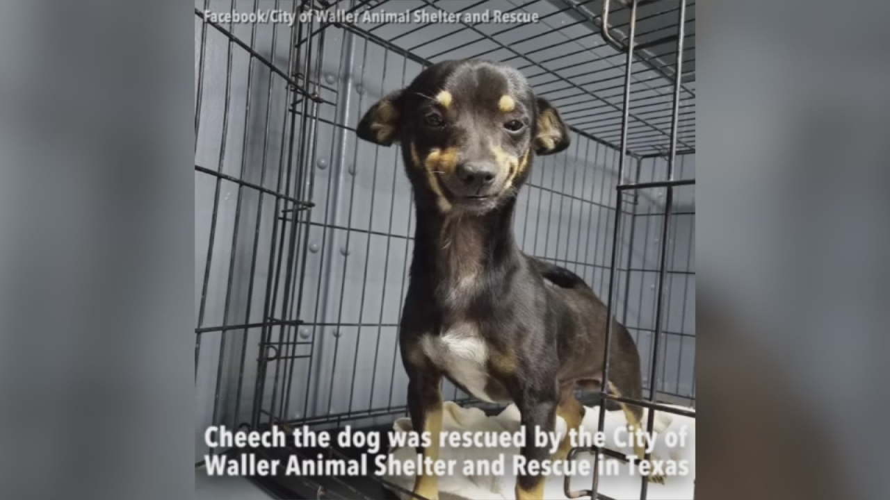 smiling dog rescue
