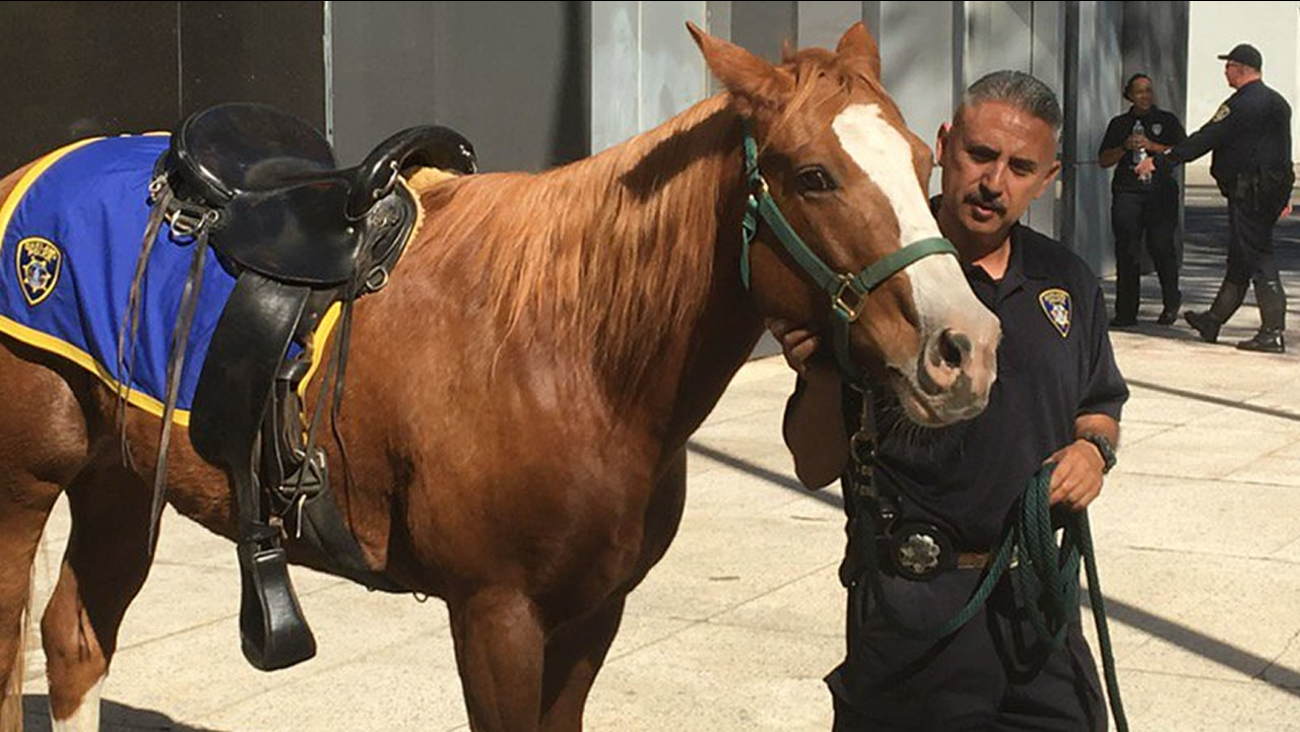 A police officer shows off one of the department's new horses at St. Anthony's school in Oakland, Calif. on Thursday, Oct. 26, 2017/