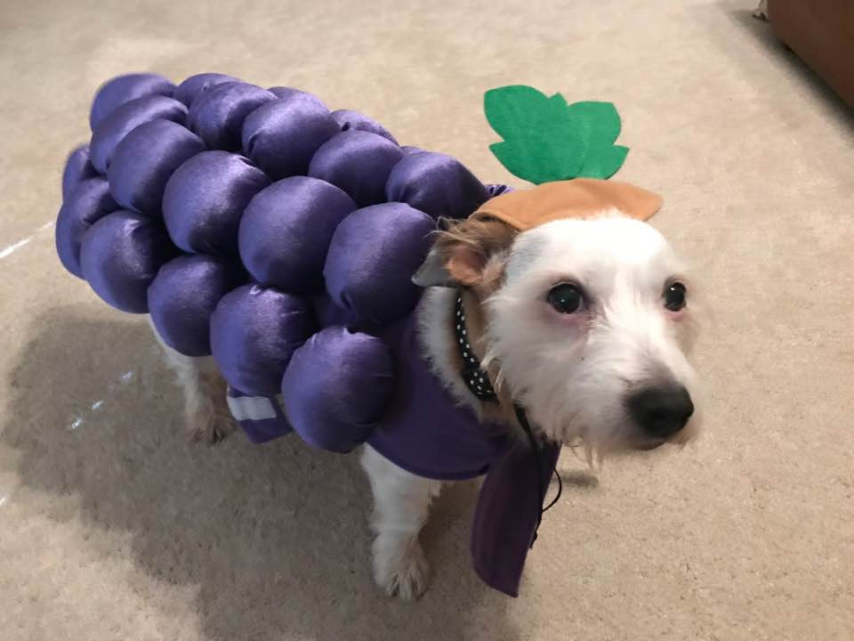 """<div class=""""meta image-caption""""><div class=""""origin-logo origin-image none""""><span>none</span></div><span class=""""caption-text"""">Betty looks grape today, doesn't she? Happy Halloween! (Credit: Nicole Hare-Hill)</span></div>"""