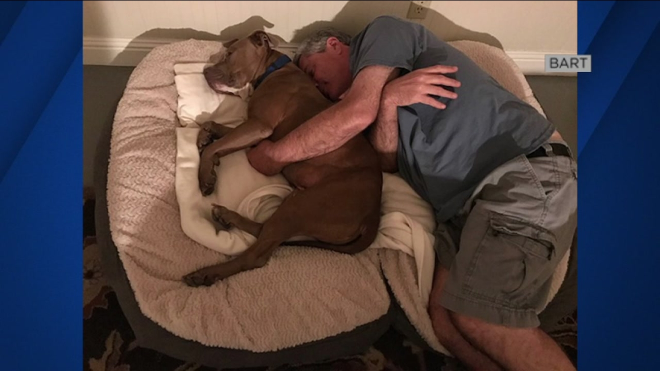 """BART"" the dog lounges in his new home with his new owner in this undated image."