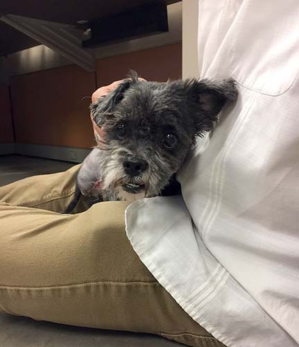 """<div class=""""meta image-caption""""><div class=""""origin-logo origin-image none""""><span>none</span></div><span class=""""caption-text"""">A neglected dog that was surrendered to an animal shelter by its owner was in such poor condition, his leg fell off while on the grooming table. (Maricopa County Animal Care & Control)</span></div>"""