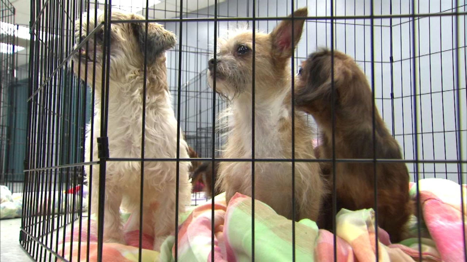 PHOTOS: Dogs rescued from 'house of horrors' ready for