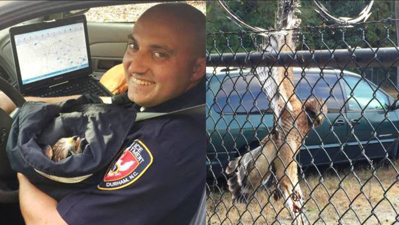 Durham police officers helped free a red-shouldered hawk that was stuck in a wire fence