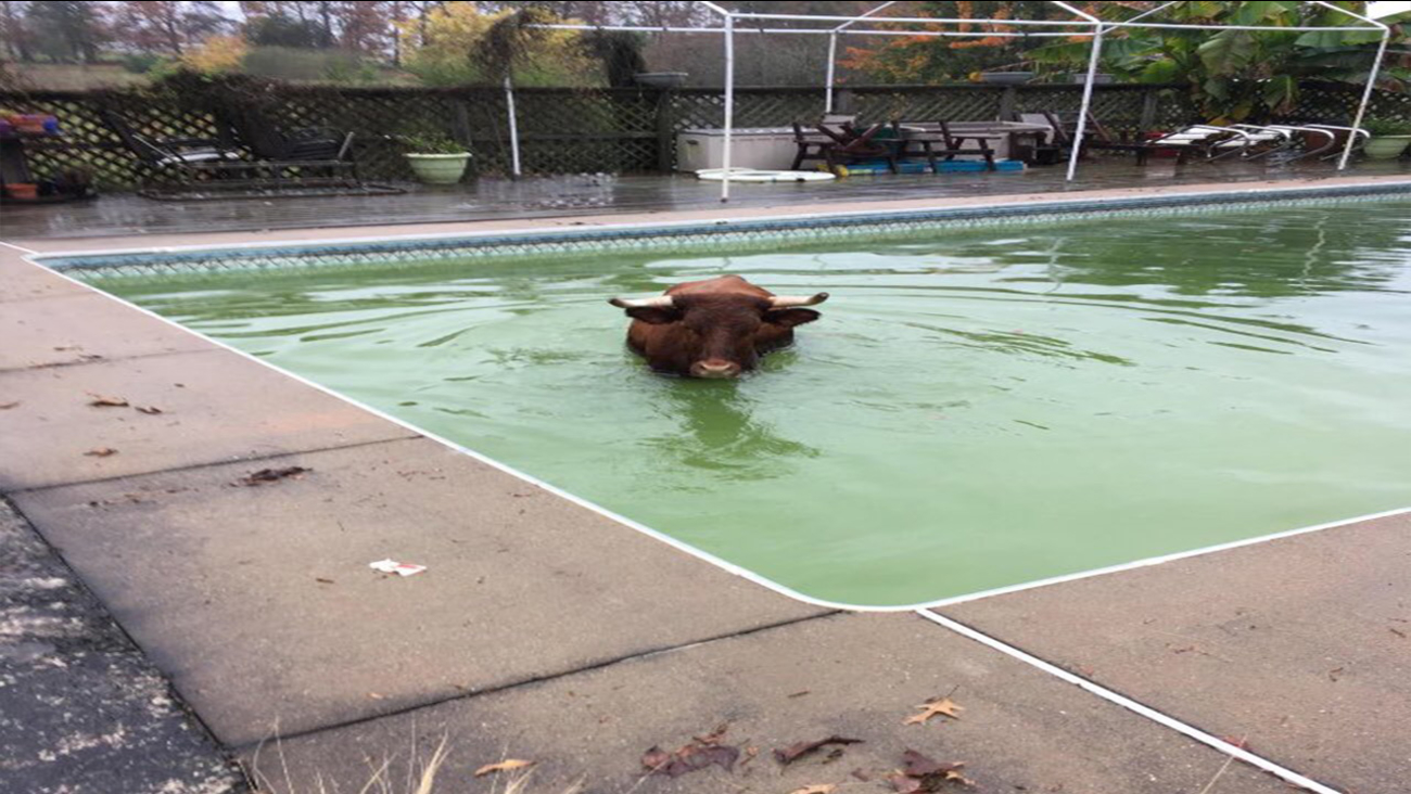 A Vance homeowner found this unwelcome guest in their swimming pool