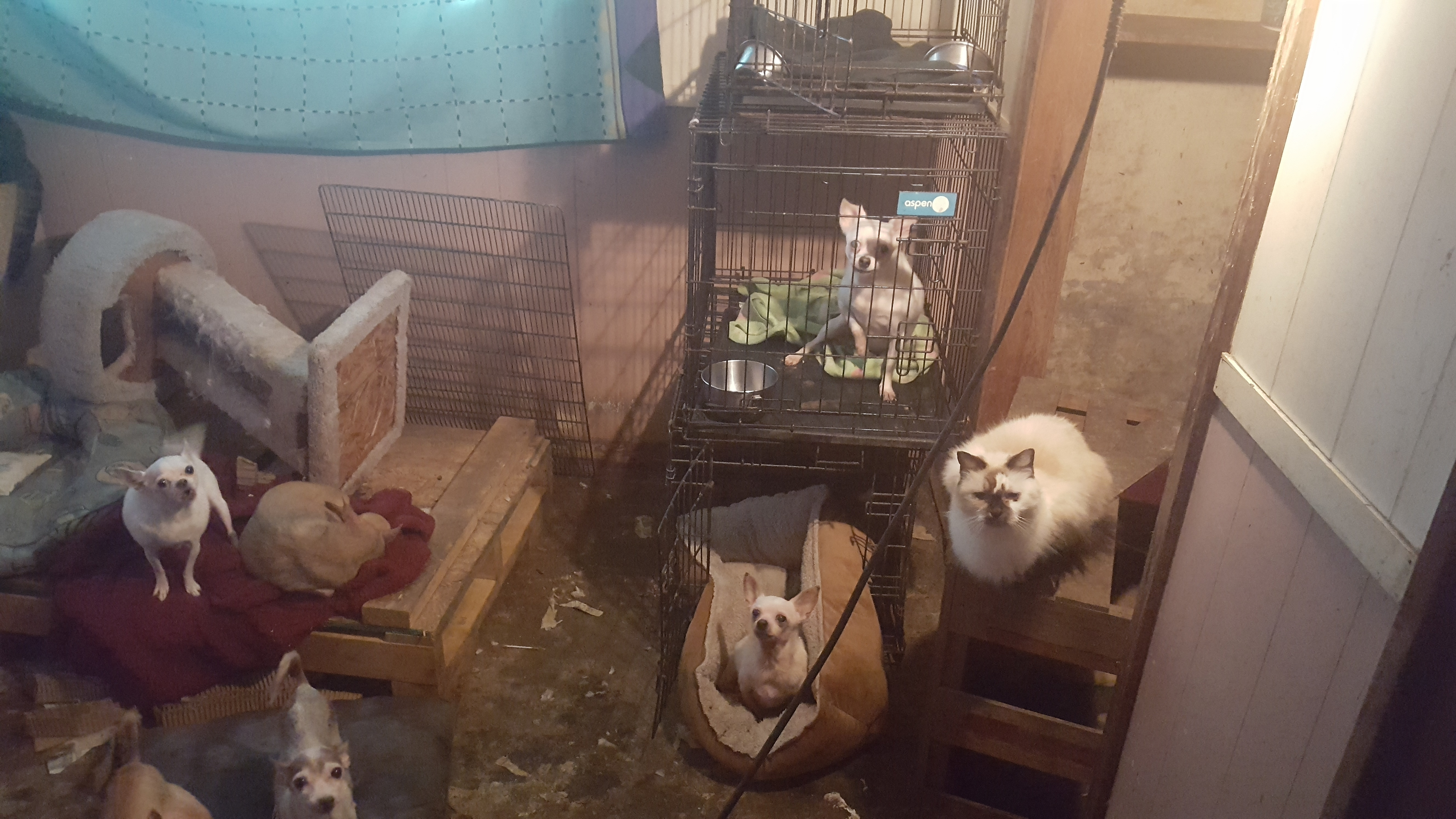 Nearly 50 animals rescued by Houston SPCA at home in Waller