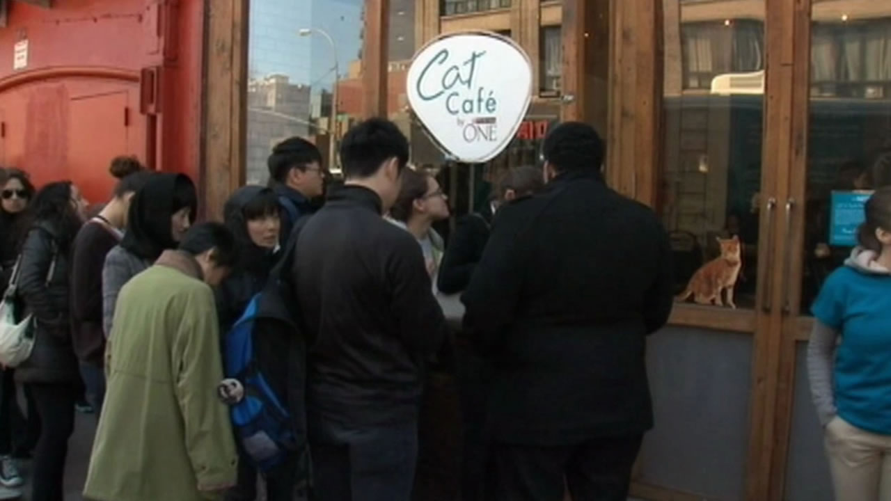 San Francisco will be getting a cat cafe that serves drinks and features cats that are up for adoption.