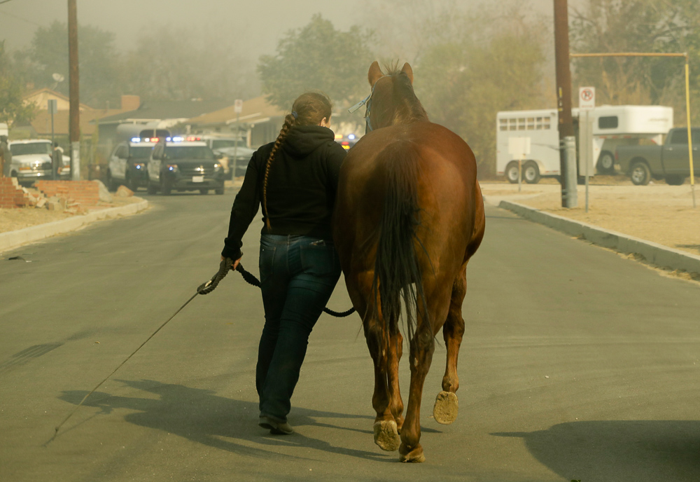 <div class='meta'><div class='origin-logo' data-origin='none'></div><span class='caption-text' data-credit='Chris Carlson/AP Photo'>A woman evacuates her horse through smoke from a wildfire in the Lake View Terrace area of Los Angeles Tuesday, Dec. 5, 2017.</span></div>