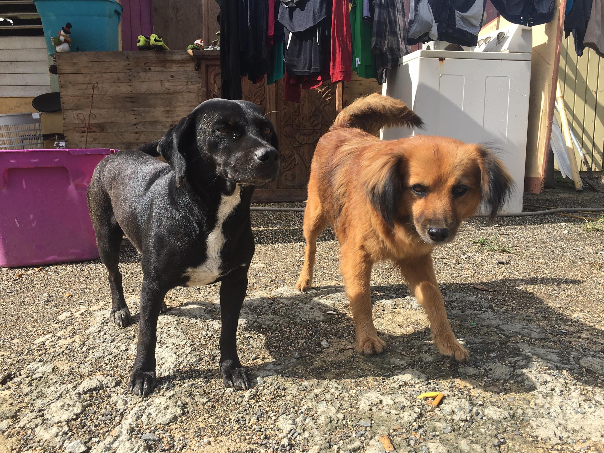<div class='meta'><div class='origin-logo' data-origin='WLS'></div><span class='caption-text' data-credit=''>Dogs in Villa Esperanza, Puerto Rico</span></div>