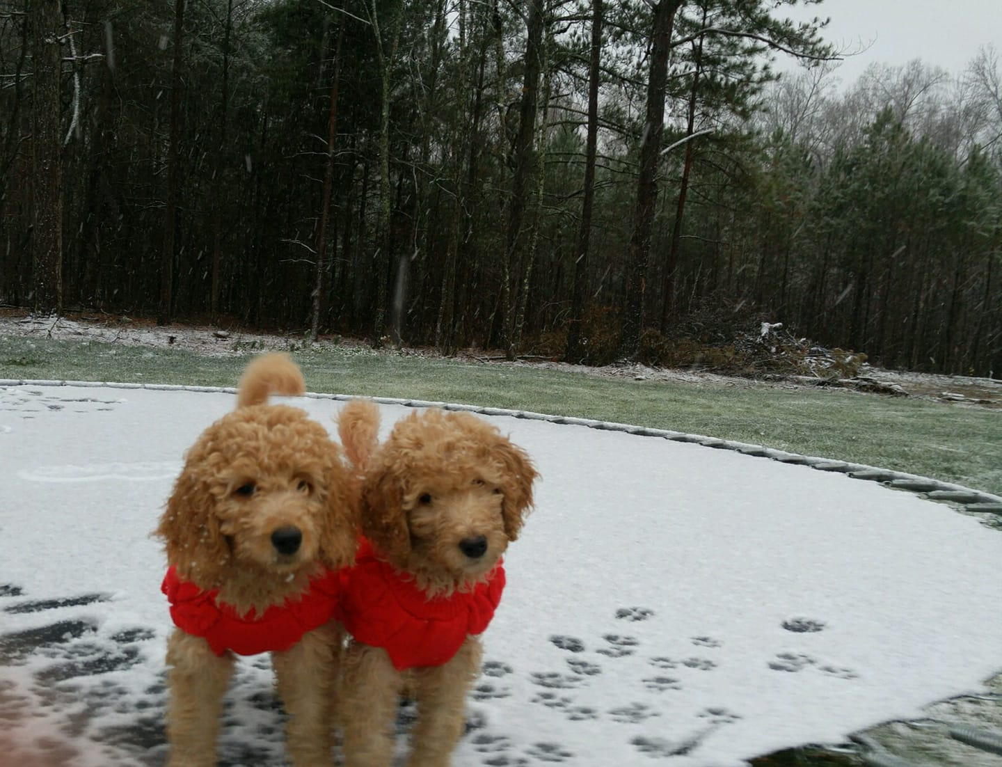 "<div class=""meta image-caption""><div class=""origin-logo origin-image none""><span>none</span></div><span class=""caption-text"">These pups are ready for the snow (Credit: Sharee Avila)</span></div>"
