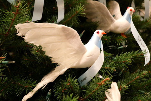 "<div class=""meta image-caption""><div class=""origin-logo origin-image none""><span>none</span></div><span class=""caption-text"">A white dove placed on the Life Celebration by Givnish Memorial Tree in honor of a loved one</span></div>"