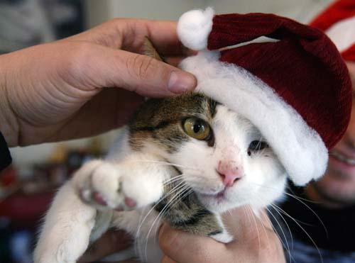 "<div class=""meta image-caption""><div class=""origin-logo origin-image none""><span>none</span></div><span class=""caption-text"">A man holds a cat with a Christmas hat for an after-Christmas sales at an animal shop in the Bulgarian capital Sofia. (AP Photo/Petar Petrov)</span></div>"