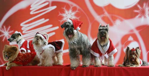 "<div class=""meta image-caption""><div class=""origin-logo origin-image none""><span>none</span></div><span class=""caption-text"">Dogs dressed in Santa Claus outfits pose during a fundraising event in suburban Manila, Philippines. (AP Photo/Aaron Favila)</span></div>"
