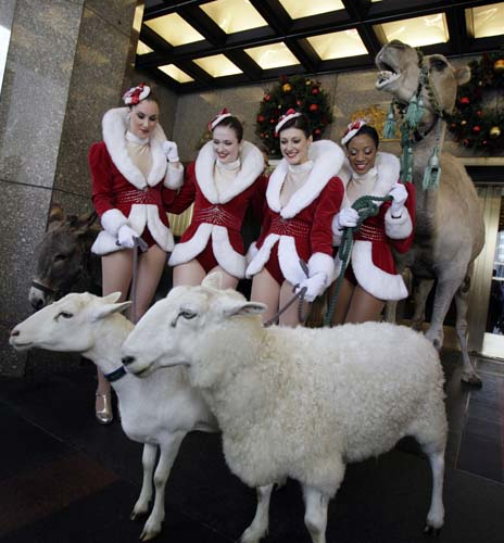 "<div class=""meta image-caption""><div class=""origin-logo origin-image none""><span>none</span></div><span class=""caption-text"">A camel and sheep pose with Rockettes as the animals arrive for rehearsals for the ""78th annual Radio City Music Hall Christmas Spectacular"" in New York. (AP Photo/Richard Drew)</span></div>"