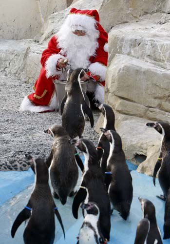 "<div class=""meta image-caption""><div class=""origin-logo origin-image none""><span>none</span></div><span class=""caption-text"">A man dressed in Santa Claus feeds humboldt penguis at the animal exhibition park Marineland in Antibes, southern France. (AP Photo/Lionel Cironneau)</span></div>"