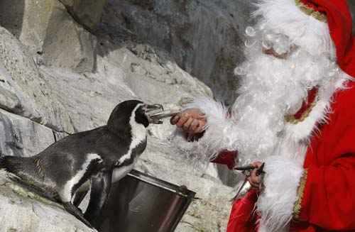 "<div class=""meta image-caption""><div class=""origin-logo origin-image none""><span>none</span></div><span class=""caption-text"">A man dressed in Santa Claus feeds an humboldt penguin at the animal exhibition park Marineland in Antibes, southern France. (AP Photo/Lionel Cironneau)</span></div>"