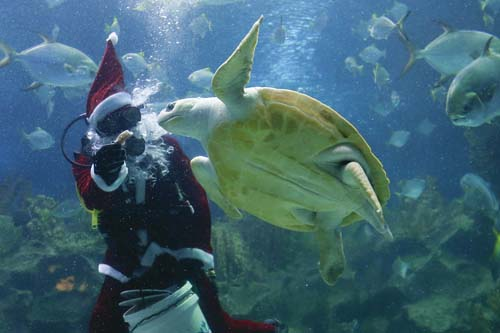 "<div class=""meta image-caption""><div class=""origin-logo origin-image none""><span>none</span></div><span class=""caption-text"">A diver in Santa costume feeds a turtle as part of the upcoming Christmas celebrations at Aquaria KLCC underwater park in Kuala Lumpur, Malaysia. (AP Photo/Vincent Thian)</span></div>"