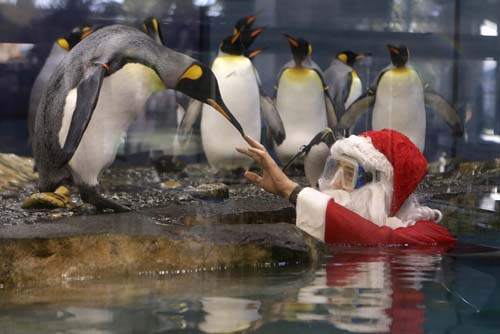 "<div class=""meta image-caption""><div class=""origin-logo origin-image none""><span>none</span></div><span class=""caption-text"">A man dressed as Santa Claus interacts with king penguins at the Marineland animal exhibition park in Antibes, southeastern France. (AP Photo/Lionel Cironneau)</span></div>"