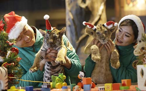 "<div class=""meta image-caption""><div class=""origin-logo origin-image none""><span>none</span></div><span class=""caption-text"">A lion cub named Dominjun, right, and a tiger cub named Jangbori wear Santa Claus caps during an event to celebrate Christmas at the Everland amusement park in Yongin, South Korea. (AP Photo/Ahn Young-joon)</span></div>"