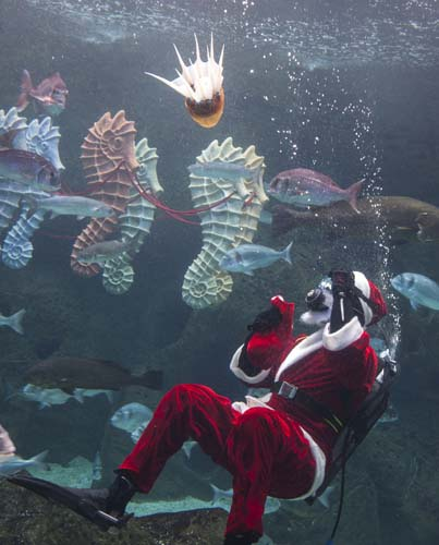 "<div class=""meta image-caption""><div class=""origin-logo origin-image none""><span>none</span></div><span class=""caption-text"">A diver dressed as Santa Claus watches a robotic octopus as it performs for the visitors at the Creta Aquarium in the town of Hersonissos, on the Greek island of Crete. (AP Photo/Bastian Parschau)</span></div>"