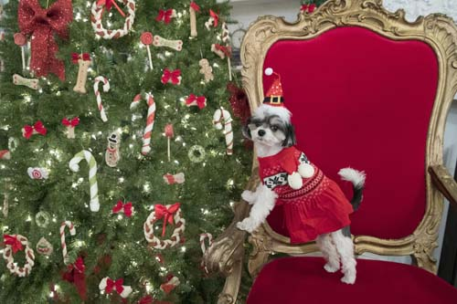 "<div class=""meta image-caption""><div class=""origin-logo origin-image none""><span>none</span></div><span class=""caption-text"">Tinkerbelle the Dog models a Martha Stewart Pets scarf sweater and a Santa hat during the PetSmart holiday collection preview in New York. (AP Photo/Mary Altaffer)</span></div>"