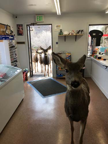 "<div class=""meta image-caption""><div class=""origin-logo origin-image none""><span>none</span></div><span class=""caption-text"">A store near Fort Collins, Colorado got a surprise visit from a few locals last week. (Lori Jones)</span></div>"
