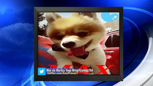 """<div class=""""meta image-caption""""><div class=""""origin-logo origin-image none""""><span>none</span></div><span class=""""caption-text"""">Big Dog Sunday - Aug. 24, 2014</span></div>"""