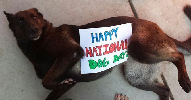 "<div class=""meta image-caption""><div class=""origin-logo origin-image ""><span></span></div><span class=""caption-text"">Happy Doggie Day from Jazmen!  ABC7 News viewers are celebrating National Dog Day by sharing photos of their beloved pups. (Photo submitted by Jennifer Barreda via Facebook)</span></div>"