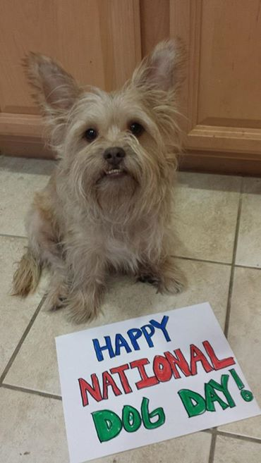 "<div class=""meta image-caption""><div class=""origin-logo origin-image ""><span></span></div><span class=""caption-text"">Happy Doggie Day from Dukey!  ABC7 News viewers are celebrating National Dog Day by sharing photos of their beloved pups. (Photo submitted by Jennifer Barreda via Facebook)</span></div>"