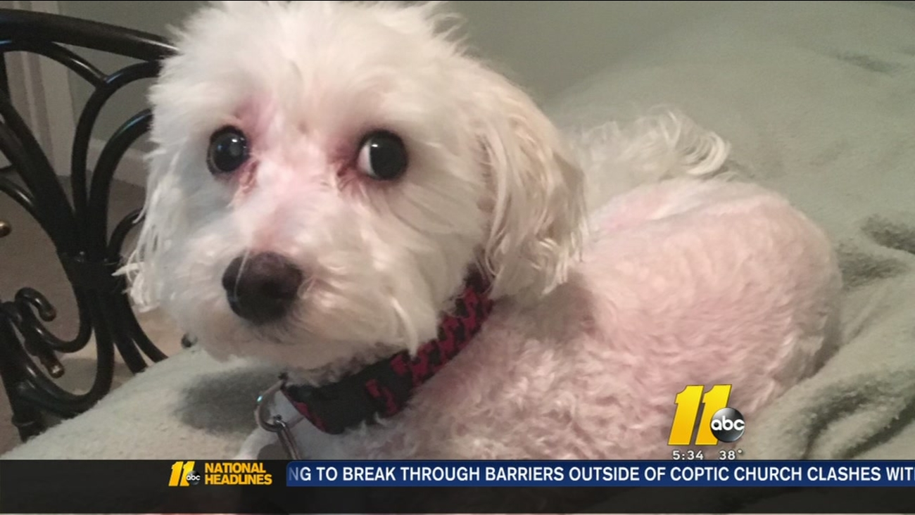 North Raleigh woman burglarized, asking for your help to find missing dog