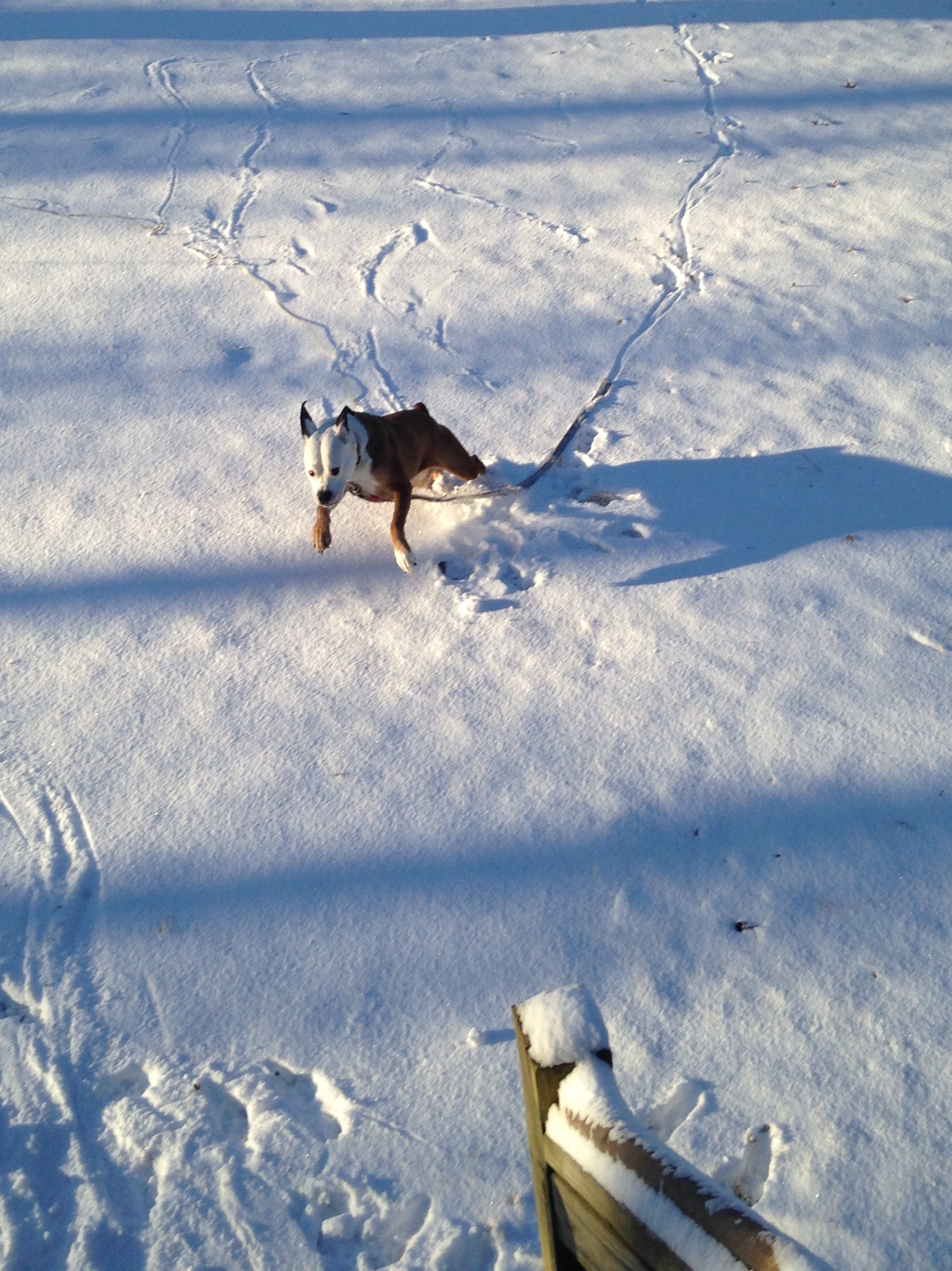 """<div class=""""meta image-caption""""><div class=""""origin-logo origin-image none""""><span>none</span></div><span class=""""caption-text"""">There's snow way this pup isn't having a good time (Credit: Crystal West)</span></div>"""